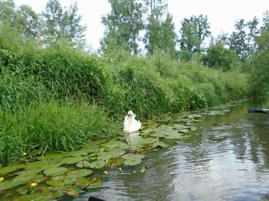 Resize of 37 Spływ Stobrawa